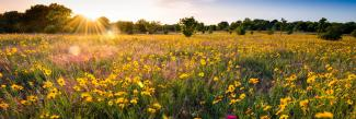Sunny field of yellow flowers